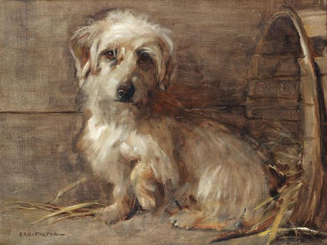 Samuel Fulton (British, 1855-1941) Dandie Dinmont 14 x 18 in. (35.5 x 46 cm.)