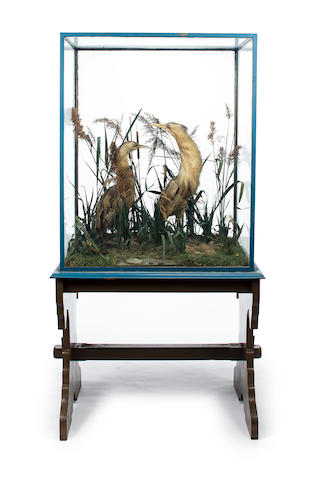 A Victorian taxidermy display of two bitterns on a later painted softwood stand<BR />second half 19th century
