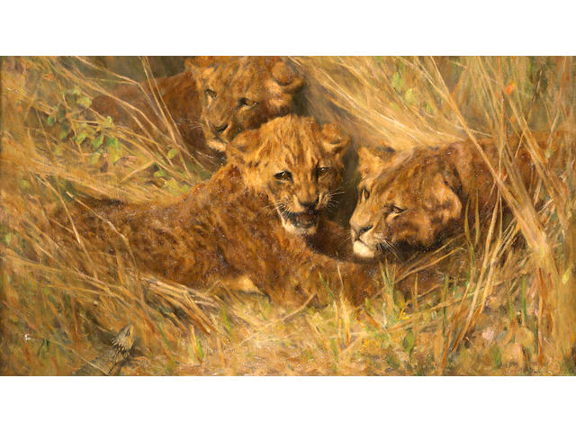 Arthur Wardle, RI (British, 1864-1949) Lion cubs 30 1/4 x 40 1/4in (76.8 x 102.2cm)