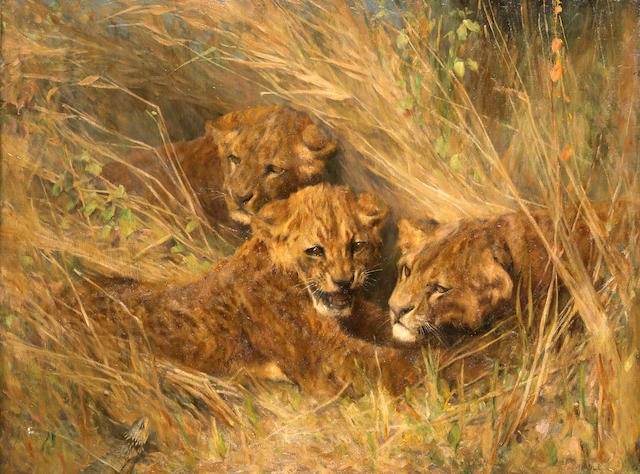 Arthur Wardle, RI (British, 1864-1949) Lion cubs 30 1/4 x 40 1/4in (76.8 x 102.2cm)