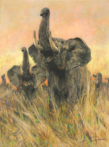 Arthur Wardle, Elephant, pastel on paper