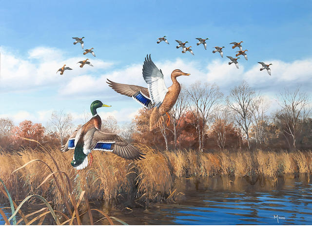 "David A. Maass (American, b. 1929), Ducks taking flight, signed, oil on board, 26 x 36in.  Together with the book ""The Wildfowl Art of David Maass"", signed by the author and signed and inscribed by David Maass, 'To Bob + Margie Petersen with warm regards - Dave Maas, June 3, 97'"