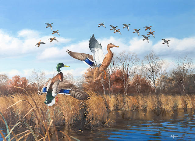 """David A. Maass (American, b. 1929), Ducks taking flight, signed, oil on board, 26 x 36in.  Together with the book """"The Wildfowl Art of David Maass"""", signed by the author and signed and inscribed by David Maass, 'To Bob + Margie Petersen with warm regards - Dave Maas, June 3, 97'"""
