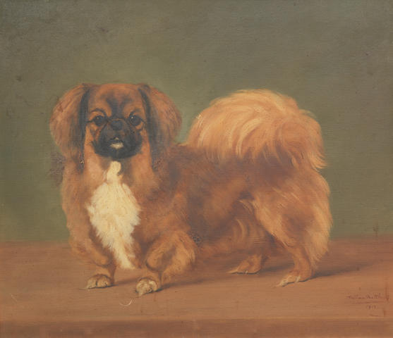 William Matthews (British, active 1912-1940) A Pekingese  20 x 23 in. (50.5 x 58.5 cm.)
