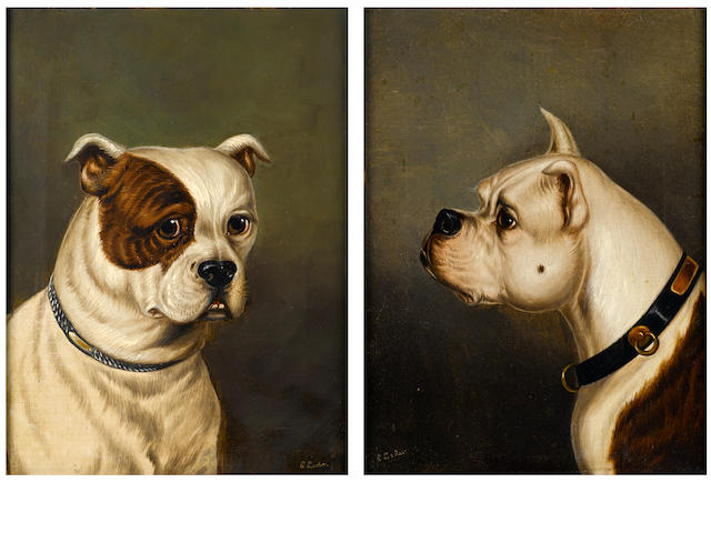 James Loder Of Bath (British, 1784-1860) Two Bulldogs each 12 x 9 in. (30 x 23 cm.)