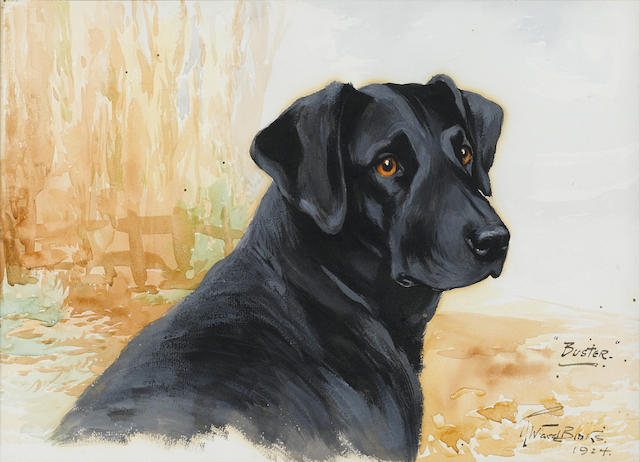 Reuben Ward Binks (British, 1880-1950) Buster, a black Labrador 10 x 14 in. (25 x 36 cm.)