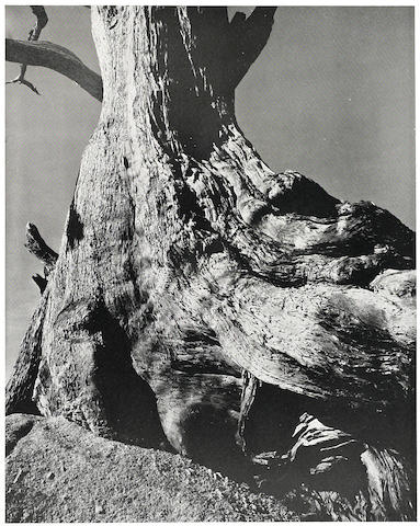 WESTON, EDWARD. 1886-1958. Edward Weston. New York: E. Weyhe, 1932.