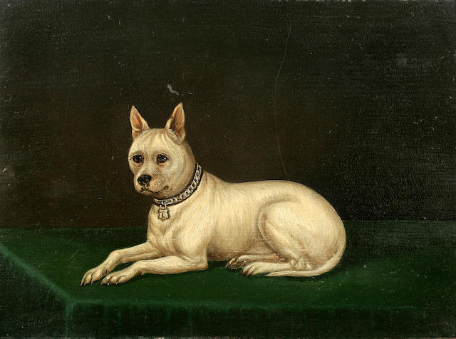 Edwin Loder of Bath (British, 1827-1885) Cribb, a White Terrier 11 x 14 3/4 in. (27.9 x 37.5 cm.)