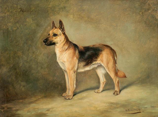 Gustav Muss-Arnolt (American, 1858-1927) Blanca, a German Shepherd dog 22 x 30 in. (55.8 x 76.2 cm.)