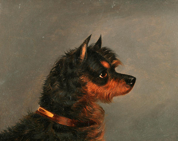 Edwin Loder of Bath (British, 1827-1885) Head of a Norwich Terrier 7 x 9 in. (17.8 x 22.9 cm.)