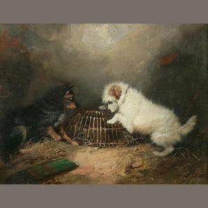 George Armfield (British, 1810-1893) Terriers with a caged rat 7 1/8 x 9 1/8 in. (18.1 x 23.2cm.)