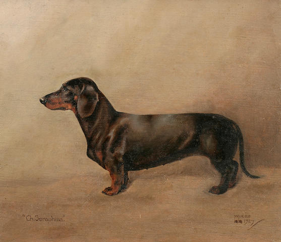William Lucas Lucas (British, 20th century) Ch. Seraphina, a Dachshund 12 x 13 3/4 in. (30.5 x 34.9 cm.)
