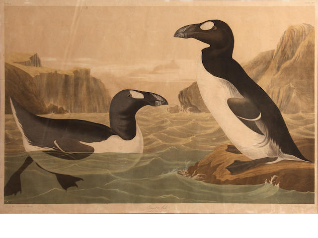 After John James Audubon (American, 1785-1851); Great Auk (Pl. 465);