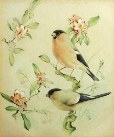 Edward Julius Detmold (British, 1883-1957) A pair of bullfinches 11 7/8 x 10 1/2in