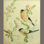 Edward Julius Detmold, A pair of Bullfinches