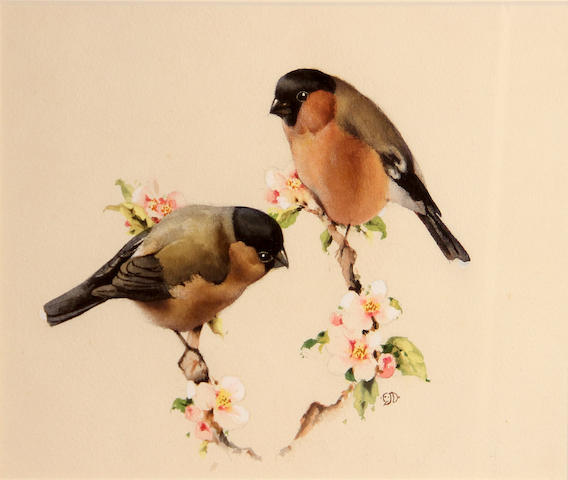 Edward Julius Detmold (British, 1883-1957) Bullfinches and blossom sight, 9 x 13in