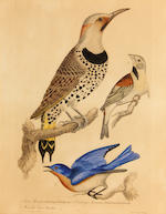 Alexander Wilson (American, 1766-1813); A Group of Eight Plates, from American Ornithology;