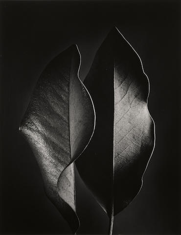 Ruth Bernhard (1905-2006); Two Leaves;