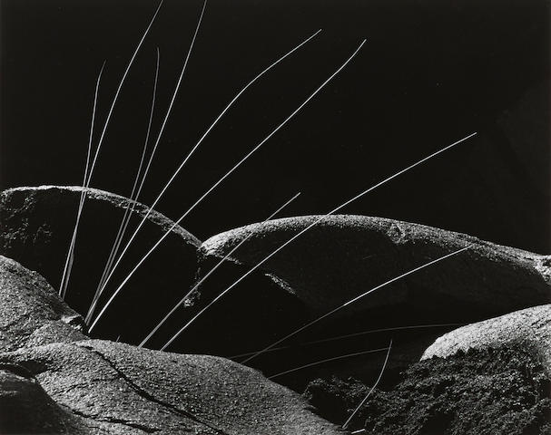 Brett Weston (1911-1993); Grass and Lava;