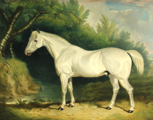 British School, 19th Century A gray hunter 25 x 30in