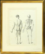 Five prints depicting human anatomy and skeletons after J. B. F. Léveillé
