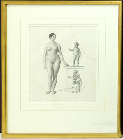 Five prints depicting human anatomy and skeletons after Leveille