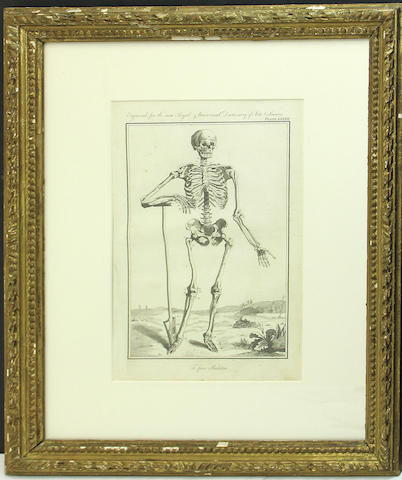 Two prints of skeletons in gilt frames