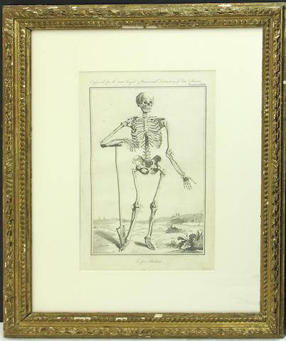 Two prints of skeletons in gilt frames