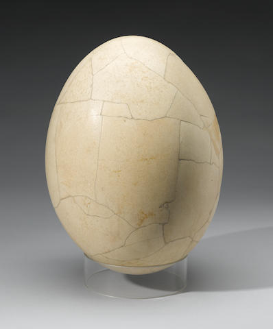 Elephant Bird Egg