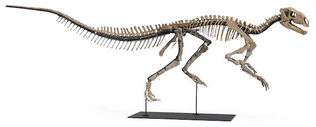 Mounted Juvenile Tenontosaurus Skeleton