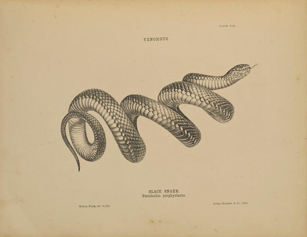 KREFFT, GERARD. 1830-1881. The Snakes of Australia; an Illustrated and Descriptive Catalogue of All the Known Species. Sydney: Thomas Richards, 1869.