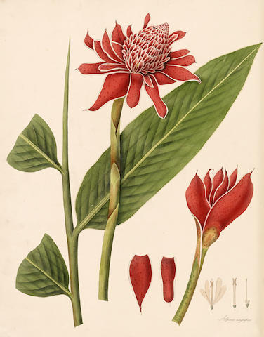 ROSCOE, WILLIAM. 1753-1831. Monandrian Plants of the Order Scitamineae.... Liverpool: George Smith, [1824-]1828.