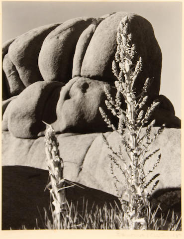 Edward Weston (American, 1886-1958); Yucca and rock, Mojave Desert;