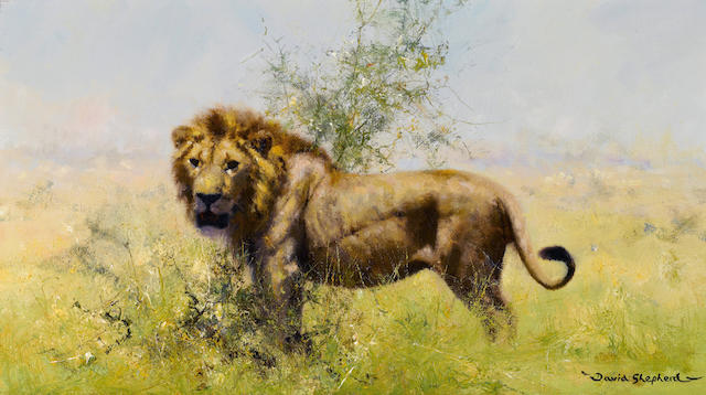 David Shepherd, O.B.E. (British, born 1931) Lion 9 x 16in (22.8 x 40.7cm)