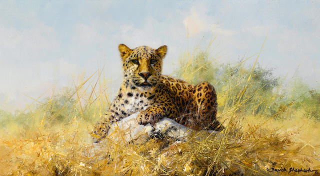 David Shepherd, O.B.E. (British, born 1931) Leopard 9 x 16in (22.8 x 40.7cm)