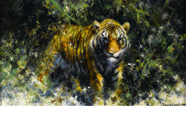 David Shepherd, O.B.E. (British, born 1931) A tiger in the bush 7 x 12in (17.8 x 30.5cm)