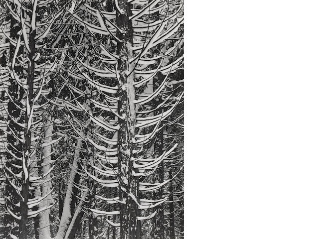 Ansel Adams (1902-1984); Winter, Forest Detail, Yosemite Valley;