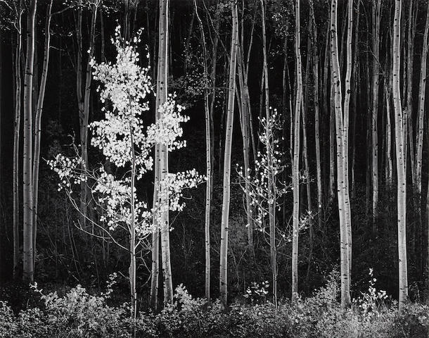 Ansel Adams (1902-1984); Aspens, Northern New Mexico;