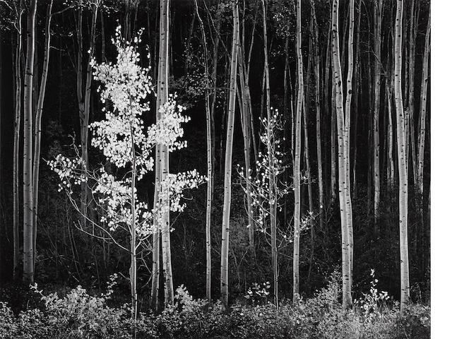 Ansel Adams (1902-1984); Aspens, Northern New Mexico;