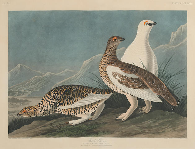 After John James  Audubon (1785-1851); Rock Grous (Pl. CCCLXVII);