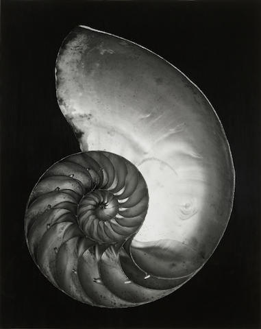 Edward Weston (1886-1958); Nautilus Shell (Half);