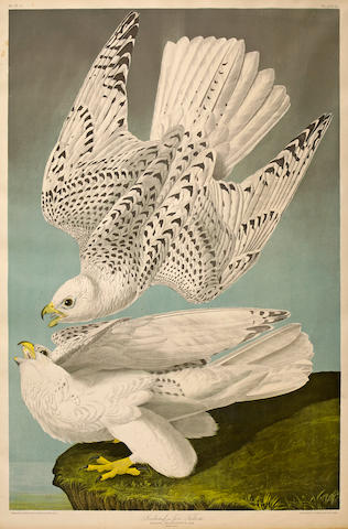 After John James  Audubon (1785-1851); Iceland or Jer Falcon (Pl. 19);