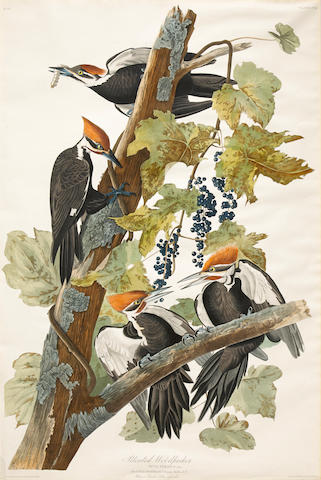After John James  Audubon (1785-1851); Pileated Woodpecker (Pl. CXI);