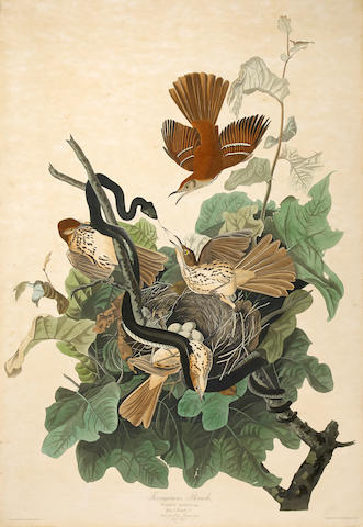 After John James  Audubon (1785-1851); Ferruginous Thrush (Pl. CXVI);
