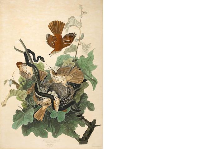 After John James  Audubon (1785-1851); Ferruginous Thrush (Pl. CXVI);