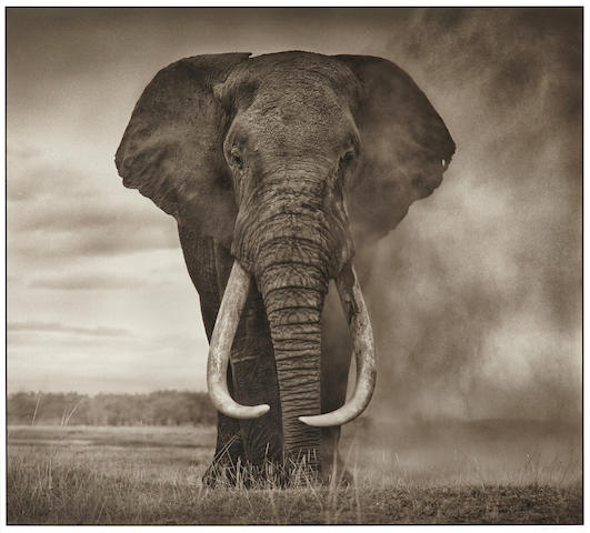 Nick Brandt (born 1966); Portrait of Elephant in Dust, Amboseli;