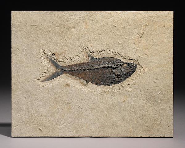 Diplomytus with C.J. Ulrich signature