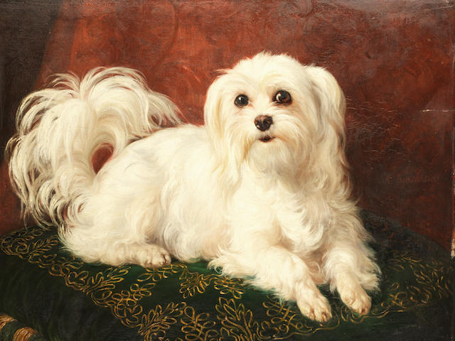 Jacques Raymond Brascassat (French, 1804-1867) Odette, a Maltese on an embroidered cushion 16 1/2 x 20 1/4in. (42 x 51.5cm.)