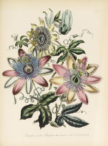 LOUDON, JANE. 1807-1858. 1. The Ladies' Flower-Garden of Ornamental Greenhouse Plants. London: Orr, [1849].