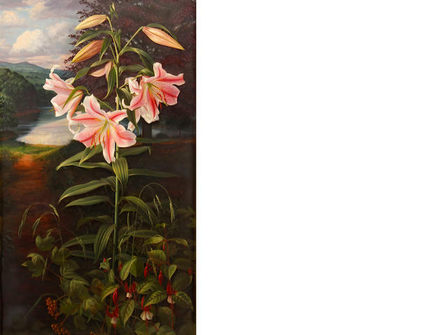 Raymond Booth (British, born 1929) Lilium 'Pink Glory' 33 3/4 x 21in